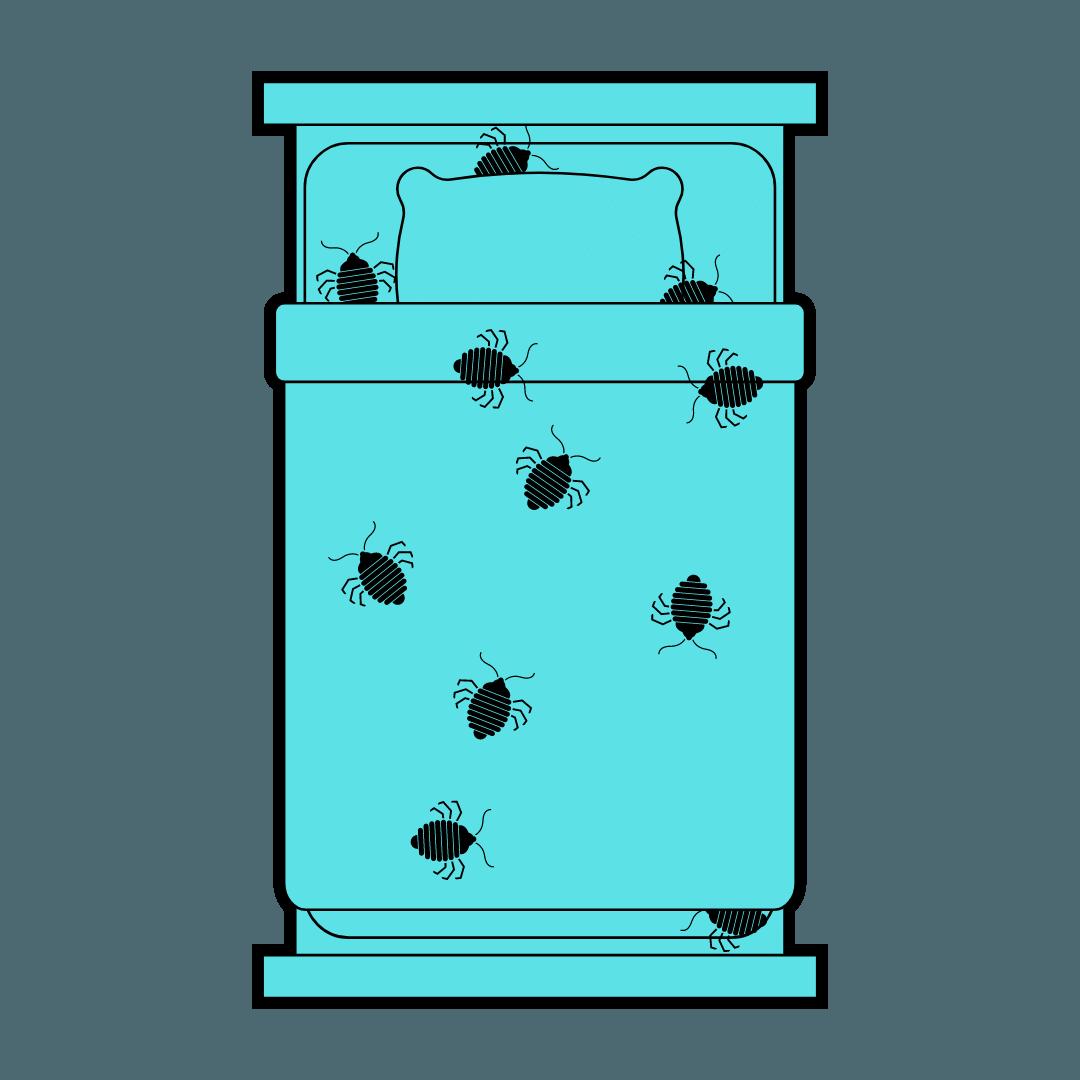 Bed Bug Control Greenslopes