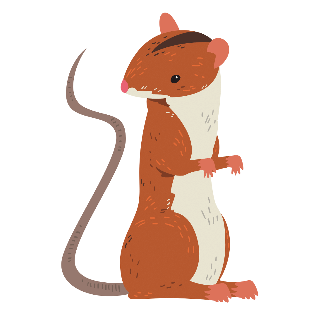 Rodent Control Greenslopes